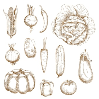 健康的な農場の野菜
