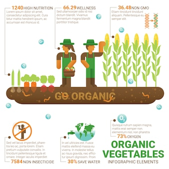 Healthy food organic vegetables infographic flat design