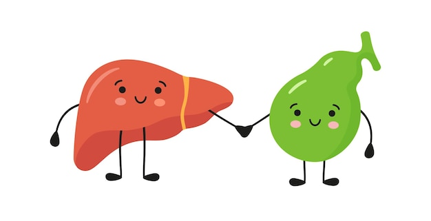 Healthy happy smiling liver and gallbladder characters hold hands