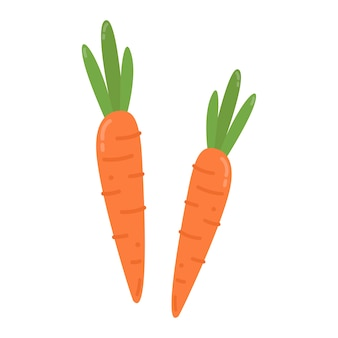 Healthy orange carrots graphic illustration