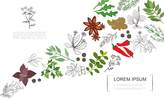 Healthy spices botanical template