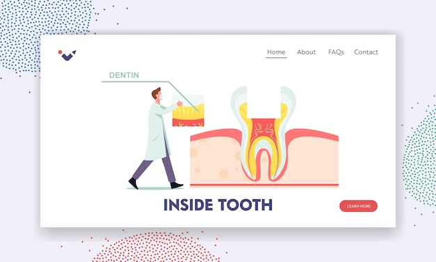 Healthy teeth anatomy and inside structure landing page template. tiny dentist male doctor character put part of dentin on huge tooth cross section view infographics. cartoon vector illustration