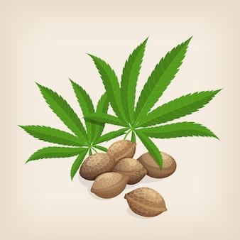 잎 대마 씨앗의 힙입니다. 삽화.