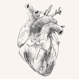 Сердечный орган с ручным рисунком в стиле эскиза