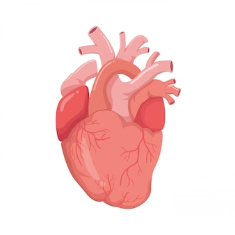 Heart real shape illustration style