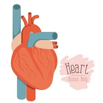 Hearth system human body