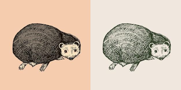 ハリネズミはとげのある森の動物のとげのある生き物のベクトル刻まれた手描きのビンテージスケッチを振り返る