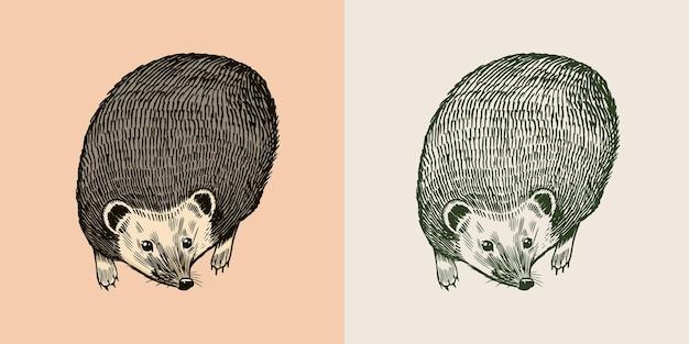 ハリネズミまたはとげのある森の動物のとげのある生き物の飛行ポーズベクトル刻まれた手描きのヴィンテージ