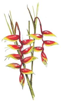 수채화로 그린 헬리코니아 식물 손