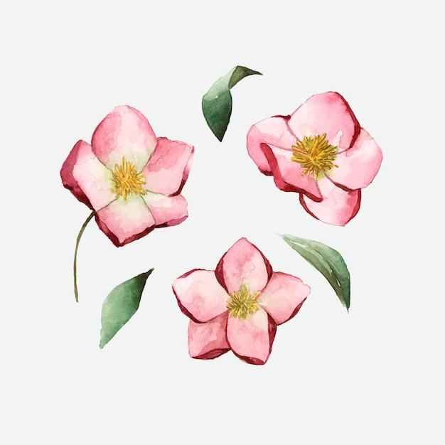 水彩画のベクトルで描かれたhelleboreの花