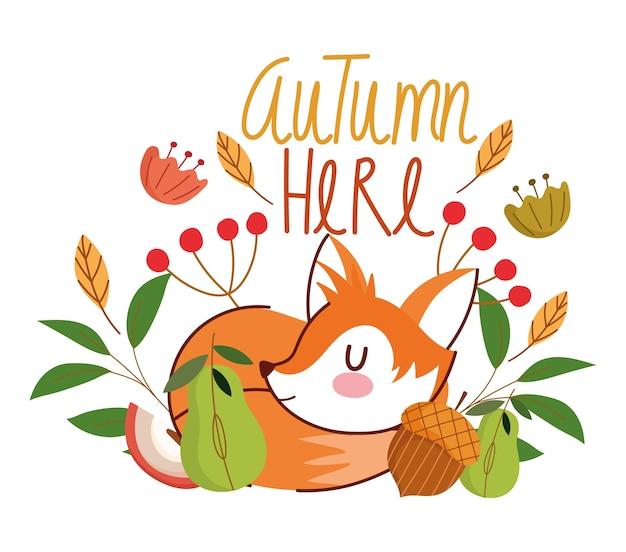 Здравствуй, осень, спящие лисичьи желудь, цветы, листья листвы.