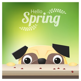Hello spring background with pug dog looking at ladybugs