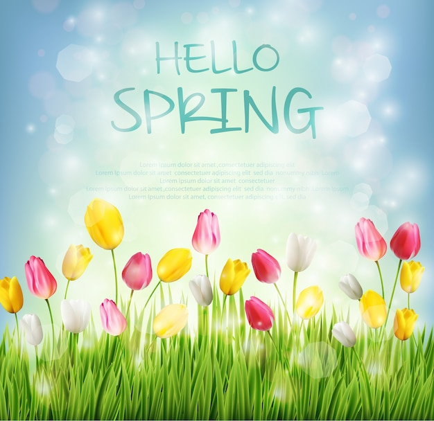 Привет весенний фон с тюльпаном цветок на размытой боке