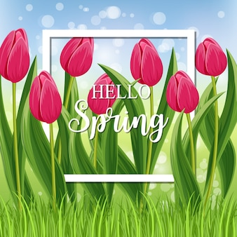 Hello spring card with blooming tulip with withe frame