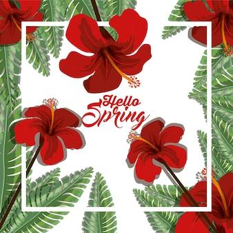 Hello spring design
