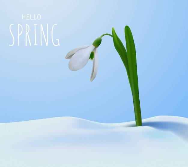 Hello spring and snowdrop.