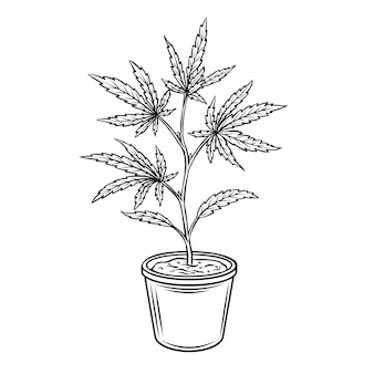 Hemp potted plant. marijuana or cannabis engraved illustration.