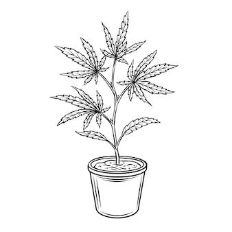 麻鉢植え。マリファナまたは大麻の刻まれたイラスト。