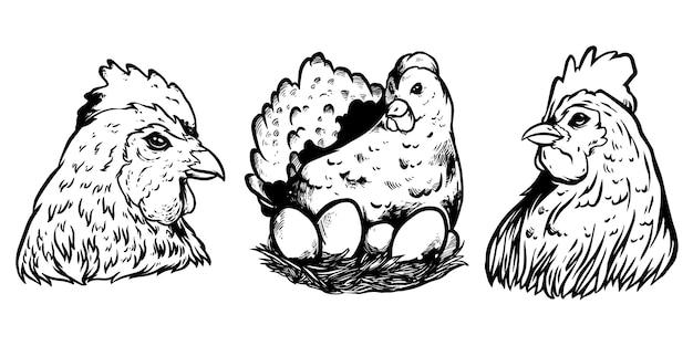 Курица и яйцо дизайн иллюстрация