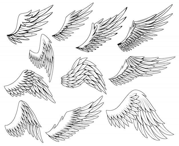 Набор геральдических крыльев. старинные птичьи крылья. набор элементов дизайна в стиле раскраски