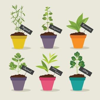 Herb garden with pots of herbs set 3
