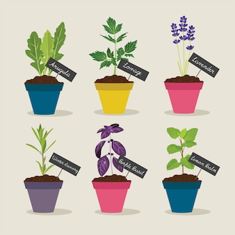 Herb garden with pots of herbs set 4