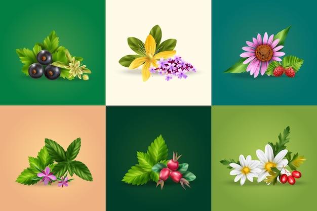 ミントカモミールブラックカラントローズヒップツッサンメリッサ分離イラストとハーブと緑茶の成分の現実的なデザインコンセプト
