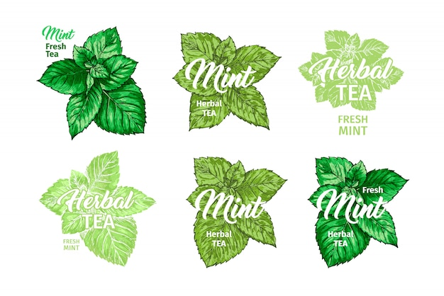 Herbal tea with fresh mint label templates set.