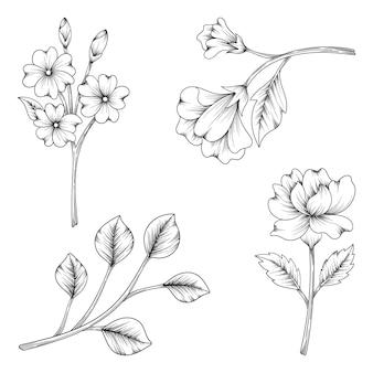 허브와 야생화와 잎 흰색 절연