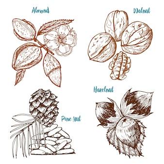 ハーブ、調味料、スパイス。アーモンドとクルミ、松の実とヘーゼルナッツ、メニューの種子。有機性植物か菜食主義の野菜。古いスケッチ、ビンテージスタイルで刻まれた刻まれた手。