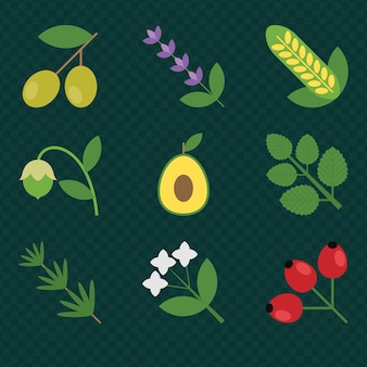 Herbs and plants color flat icons. cosmetics and natural medicine
