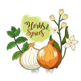Herbs and spices plants and organ food