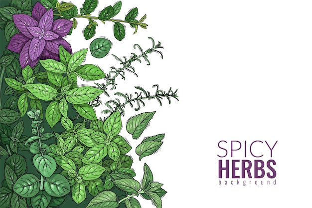 Herbs and spices poster