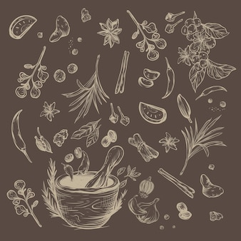 Herbs and spices rustic sketch