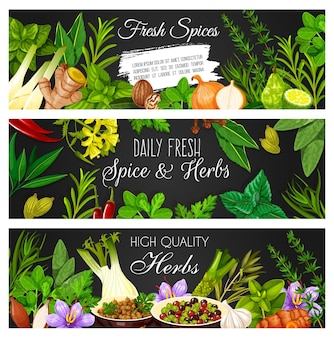 Herbs, spices and seasonings banners. vector oregano, basil and ginger, marjoram, onion and tarragon, thyme, saffron and coriander, cilantro, peppercorn and wasabi, garlic, savory and turmeric, lime