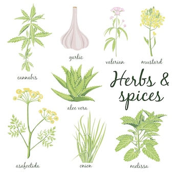 Herbs and spices set in hand drawn