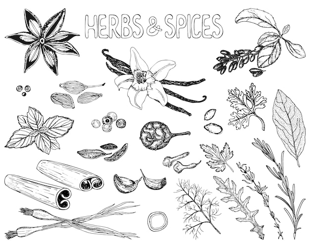 Herbs and spices set in sketch style