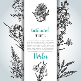 Herbs and wild flowers background
