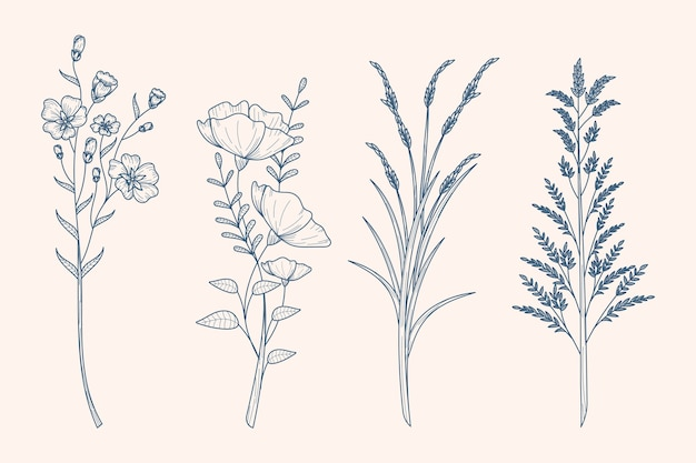 Herbs & wild flowers drawing in vintage style