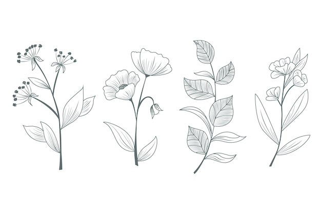 Herbs and wild flowers hand drawn for studies