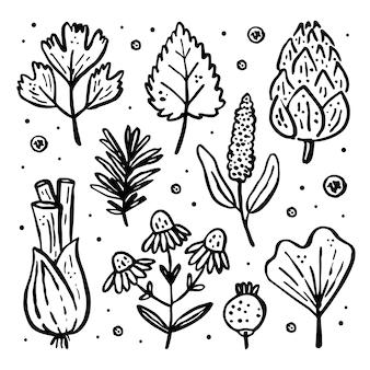 허브, 야생 식물 세트, 클립 아트. 꽃, 가지, 잎, 양파, 베리.