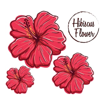 Hibiscus flower collection with colored hand draw style