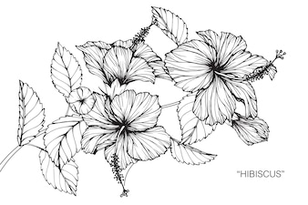 Flower sketch vectors photos and psd files free download hibiscus flower drawing illustration mightylinksfo Gallery