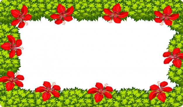 A hibiscus flower frame