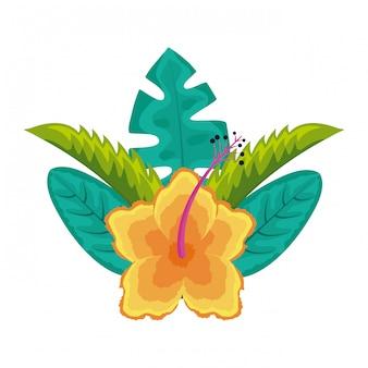 Hibiscus flower leaves palm arrangement tropical