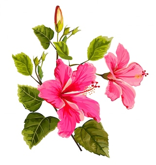 Hibiscus flower vector illustration