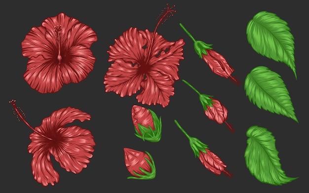 Цветочный вектор гибискус, нанесенный вручную