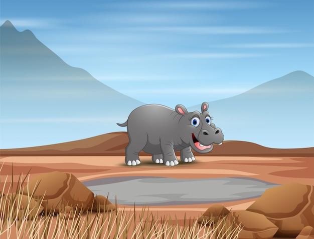 Hippopotamus animal cartoon in the dry land