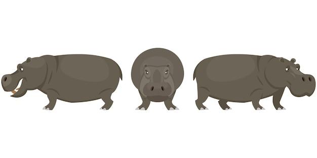 Hippopotamus in different poses.