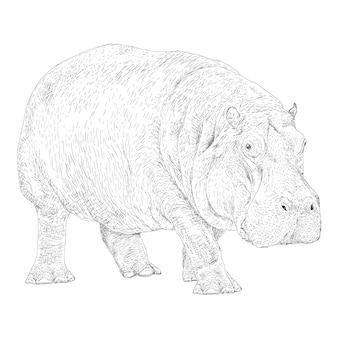 Hippopotamus illustration in solid design